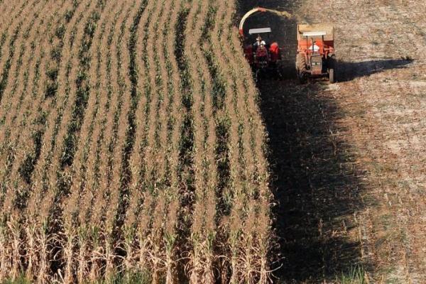 productores de maiz brasil