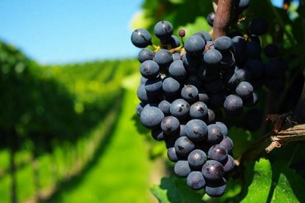 cadena vitivinicola chile