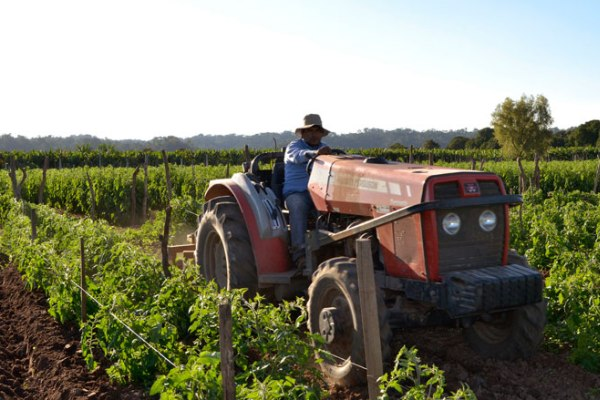 sector agrícola argentina