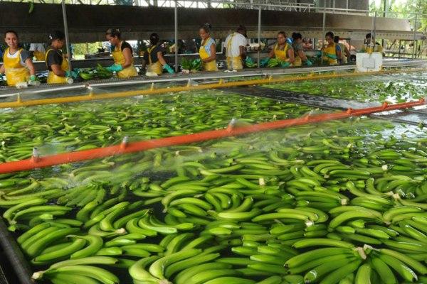 bananas costa rica