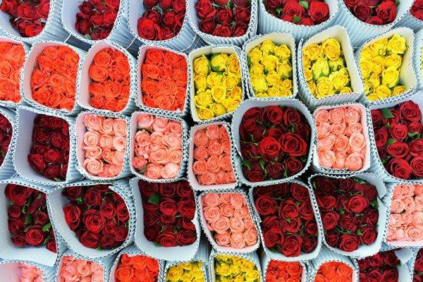 flores ecuador exportacion