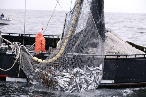 argentina pesca