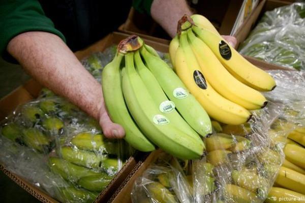 banano en ecuador