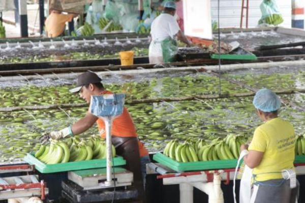 comunidad andina comercio