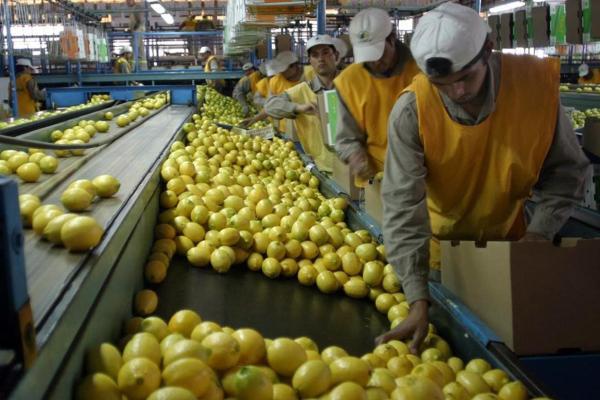 argentina limones chine