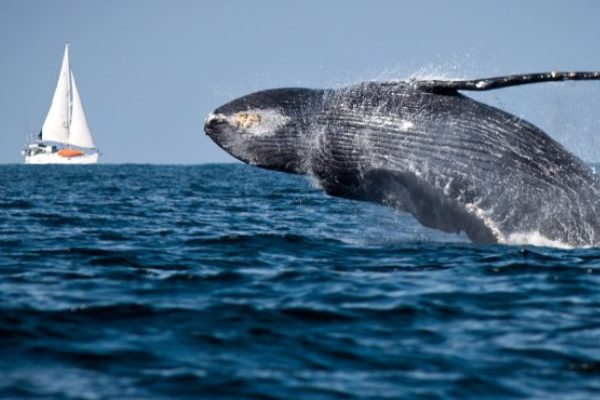 ballenas boyas inteligentes
