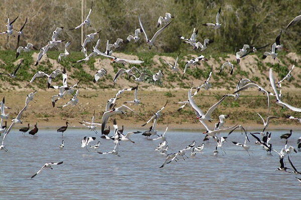 El puerto de Sevilla recibe un premio por su protección medioambiental
