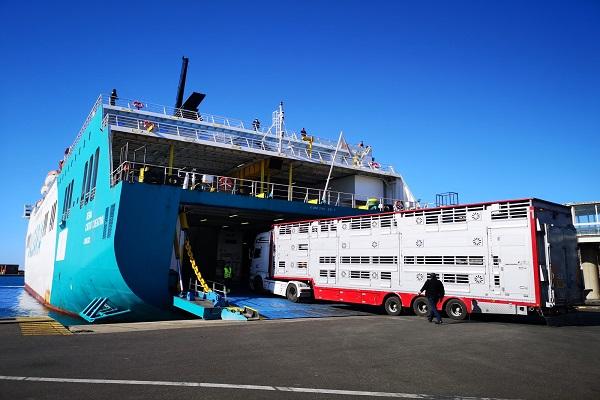 El Puerto de Algeciras incrementa un 7% el tráfico ro-ro en octubre