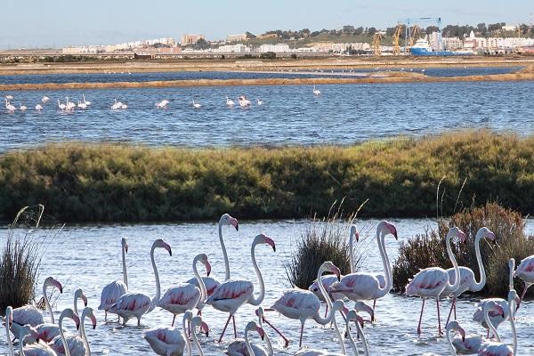 El Puerto de Huelva realiza más actuaciones para mejorar su desarrollo sostenible