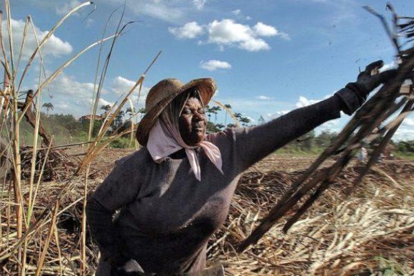 brasil caña de azucar etanol