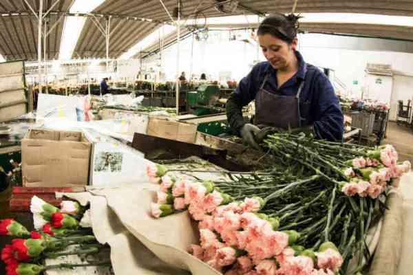 exportacion de flores