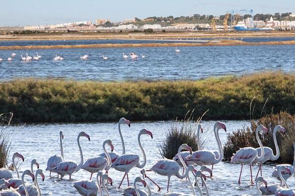 El Puerto de Huelva comprueba el cumplimiento de sus objetivos de sostenibilidad