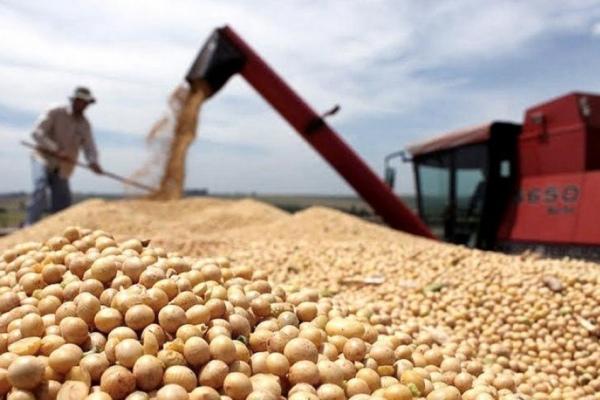 argentina granos soja