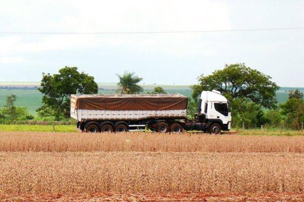 maiz argentina